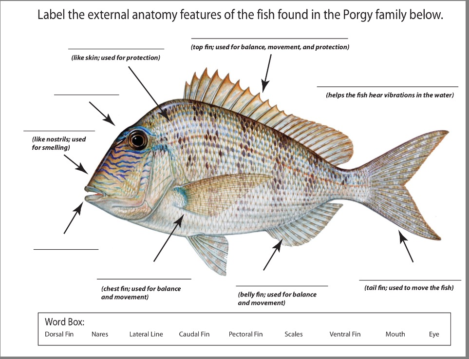 Fish dissection - Body systems